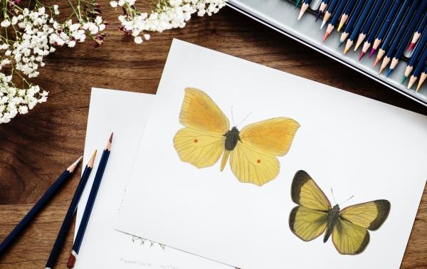 Darmowe programy do malarstwa cyfrowego