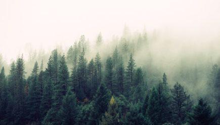 Jak zwiększyć swoją produktywność dzięki Forest App